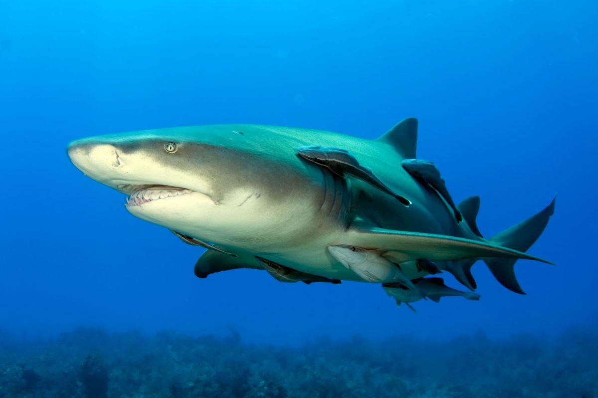 Aventure dans l'île avec des requins au départ de Santa Maria